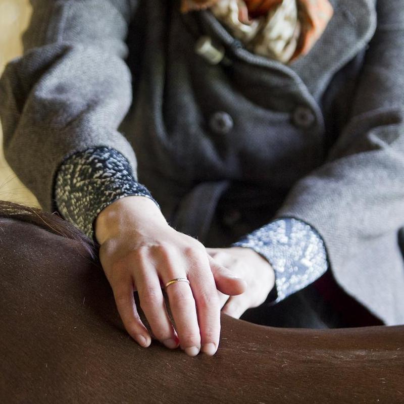 Paarden fysiotherapie
